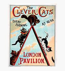 Clever Cats Photographic Print