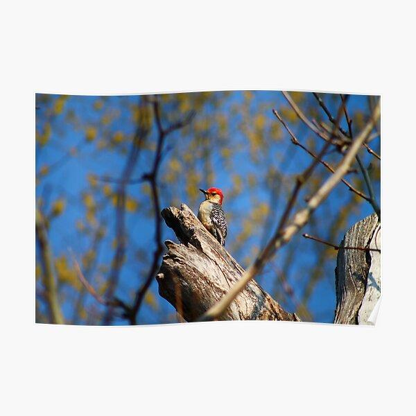 Pride Rock Woodpecker Poster