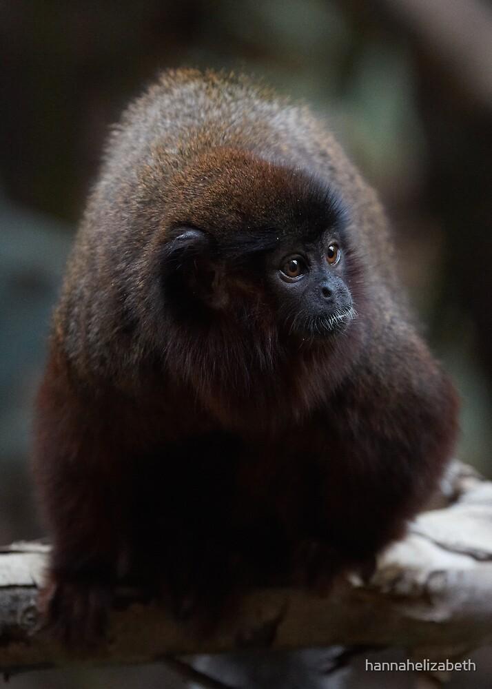 Red Titi Monkey by hannahelizabeth