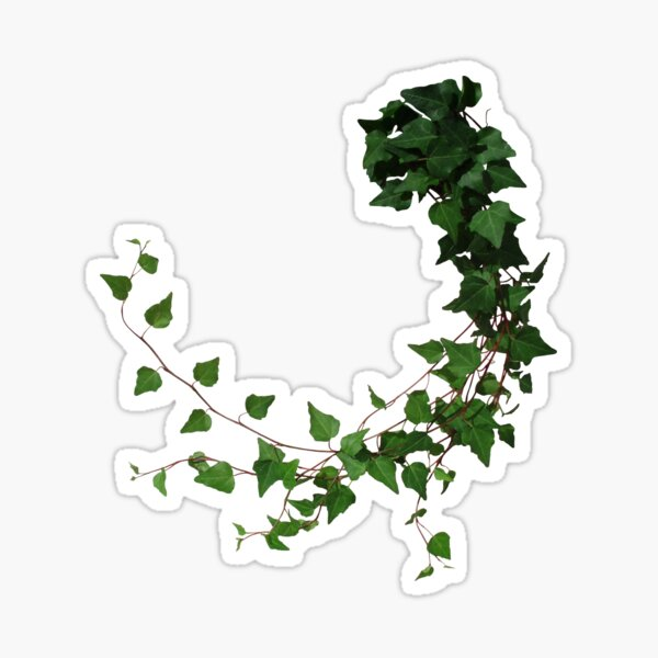 Ivy, ivy tendril Sticker