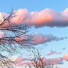 Early Evening Sky by FrankieCat
