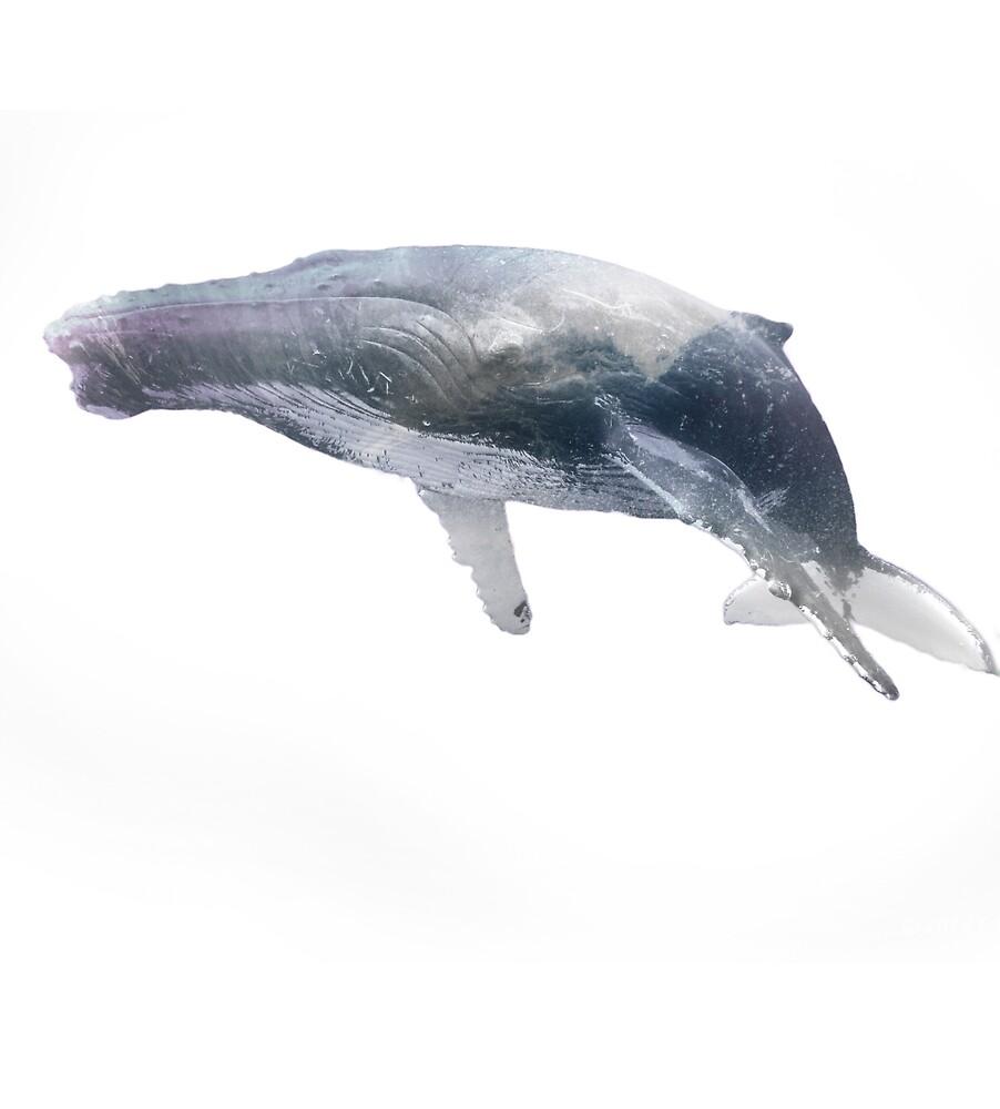 The whale by Zsolt Sandor