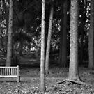 Park Bench in the Woods by mwfoster