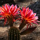 Torch Cactus by Linda Gregory