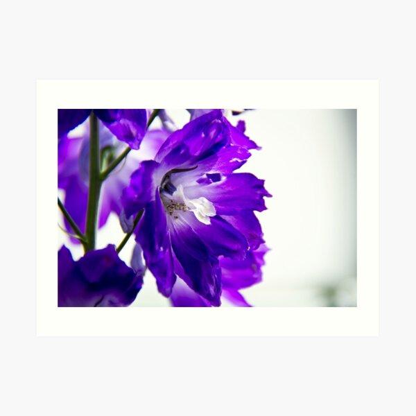 Purpled Art Print