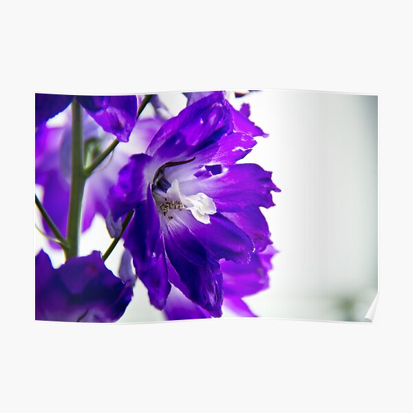 Purpled Poster
