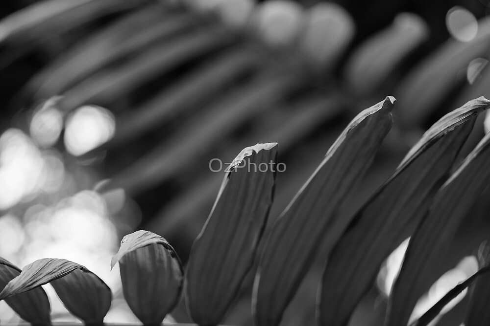 Frond Memories by OzPhoto