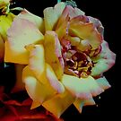 Saturated Rose. by natgirl73