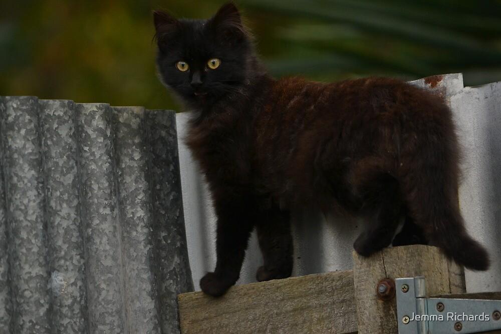 Phantom the little stray cat happy new life  by Jemma Richards