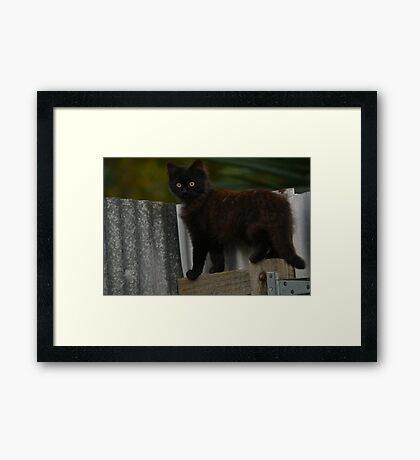 Phantom the little stray cat happy new life  Framed Print