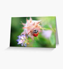 Ladybug & Wildflowers Greeting Card