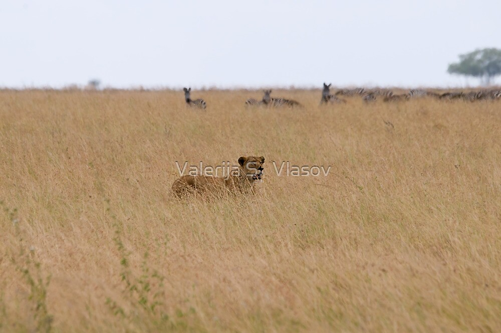 Lioness Hunting by Valerija S.  Vlasov