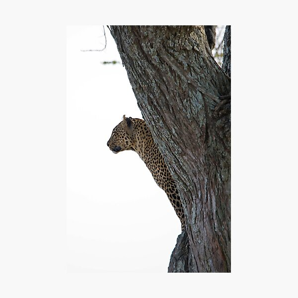 Leopard Watchtower Photographic Print