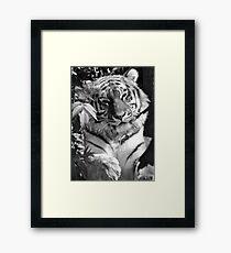Tiger (1) Framed Print