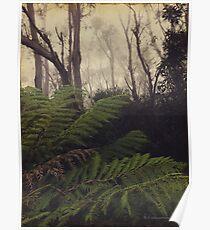 Rainforest No.11 Poster