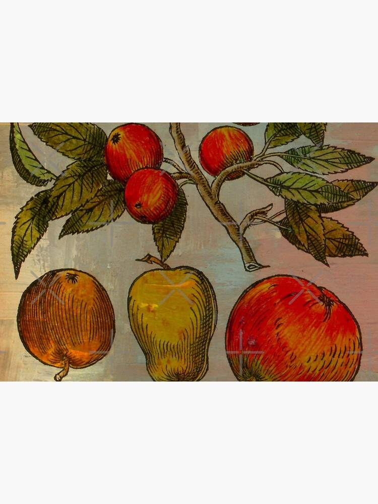 Botanical Print-Fruit Botanicals-Apples-Pears by Matlgirl