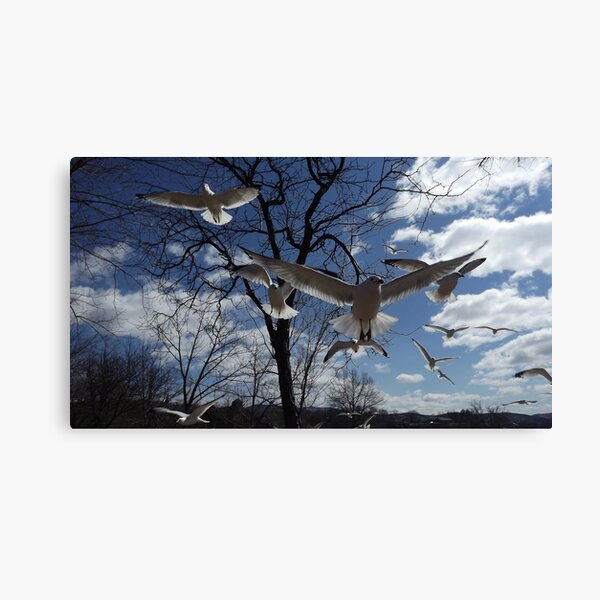 Gull Force Wind Canvas Print