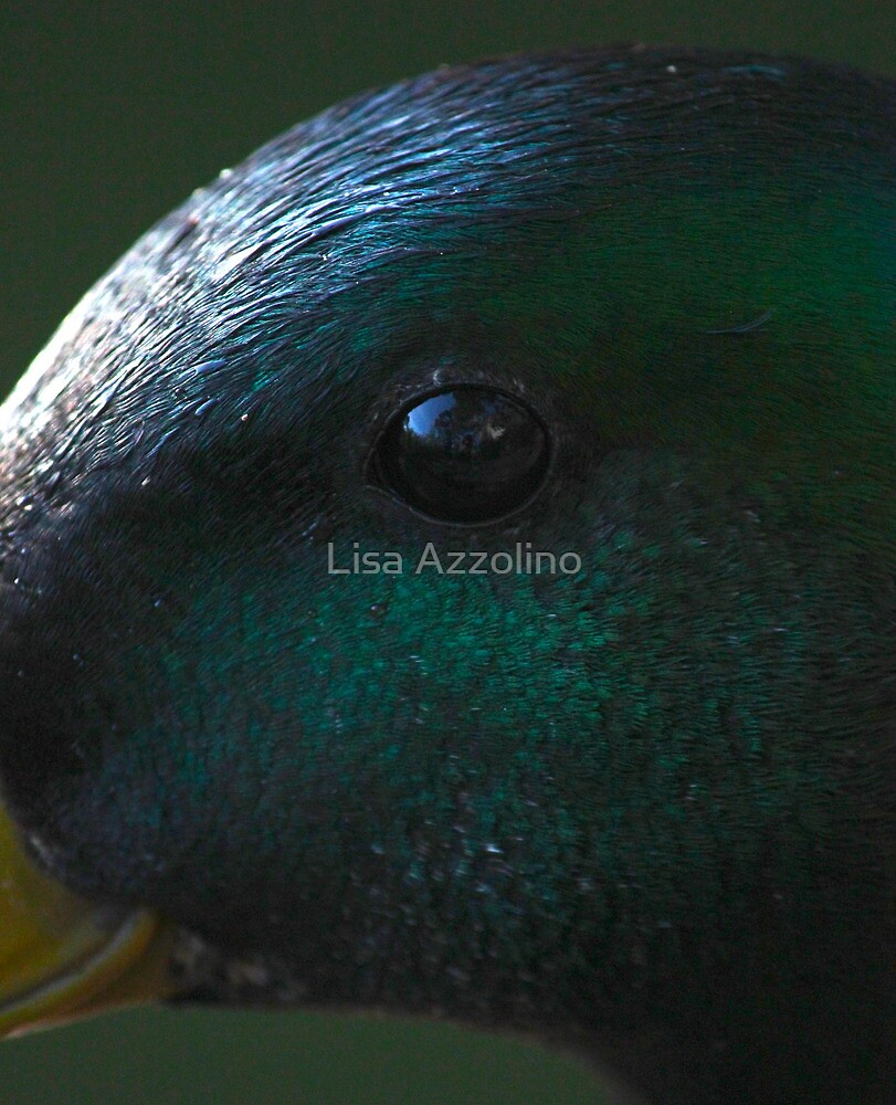 Duck by Lisa Azzolino