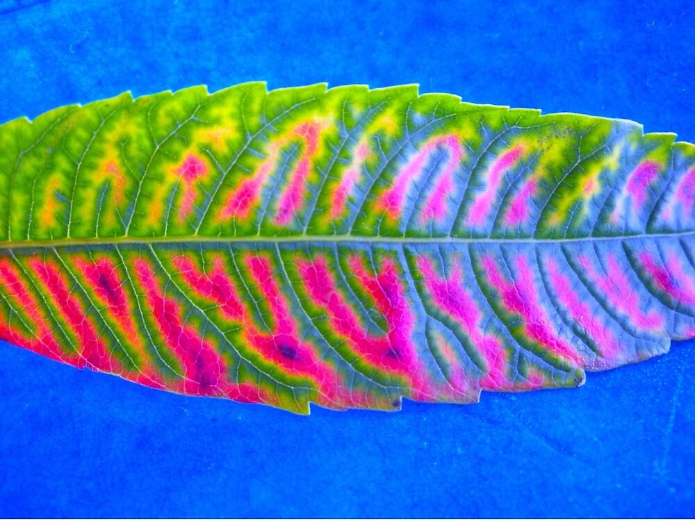 Leaf Blaze by Tapirart