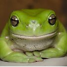 Green Tree Frog - Litoria caurulea by Andrew Trevor-Jones