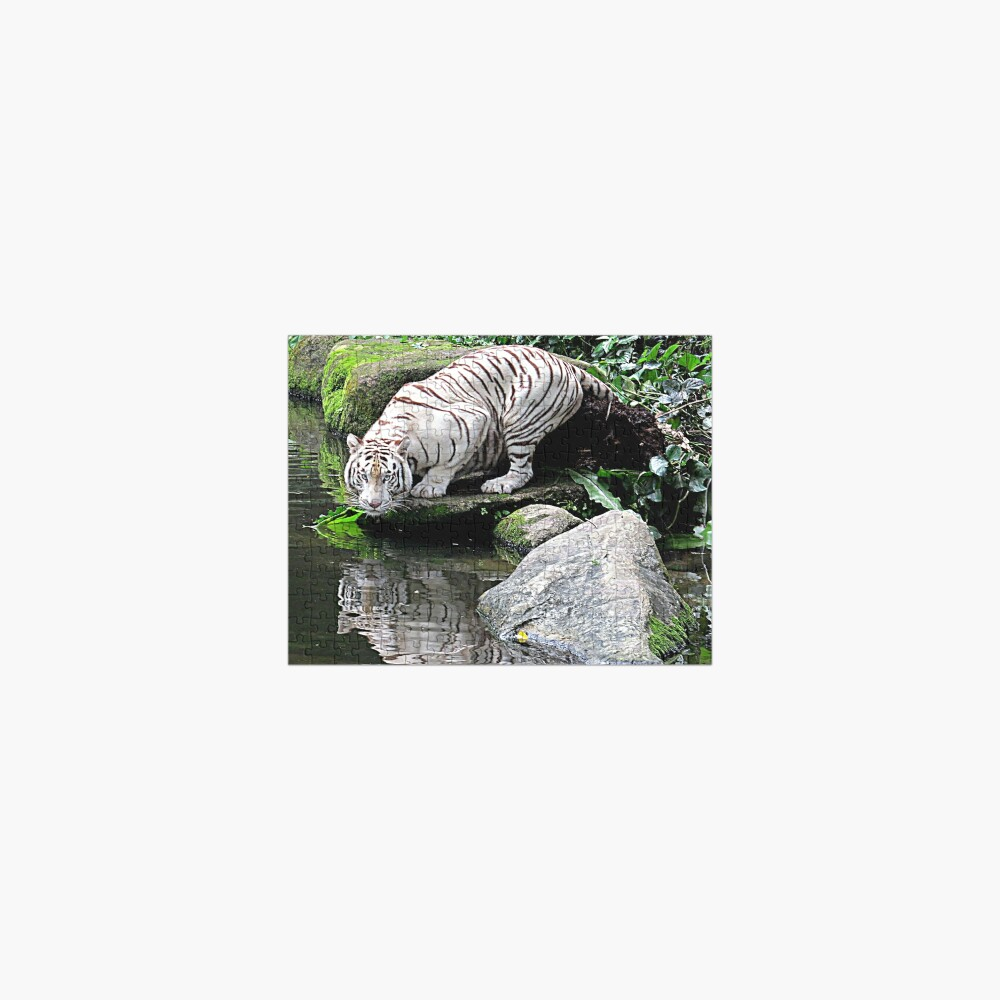 White Tiger and Reflection Jigsaw Puzzle
