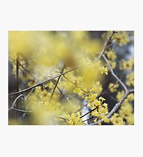 Nature by Simon Williams-Im Photographic Print