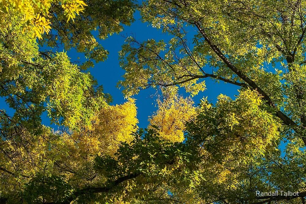 September Sky by Randall Talbot