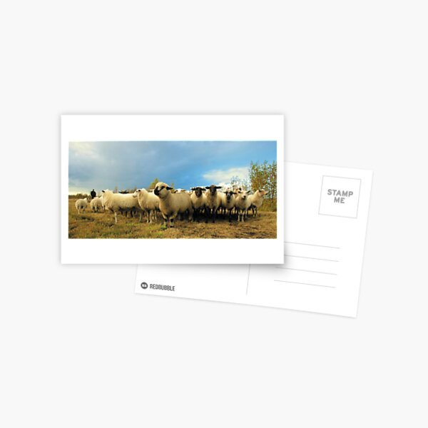 Happy herded sheep theme Postcard