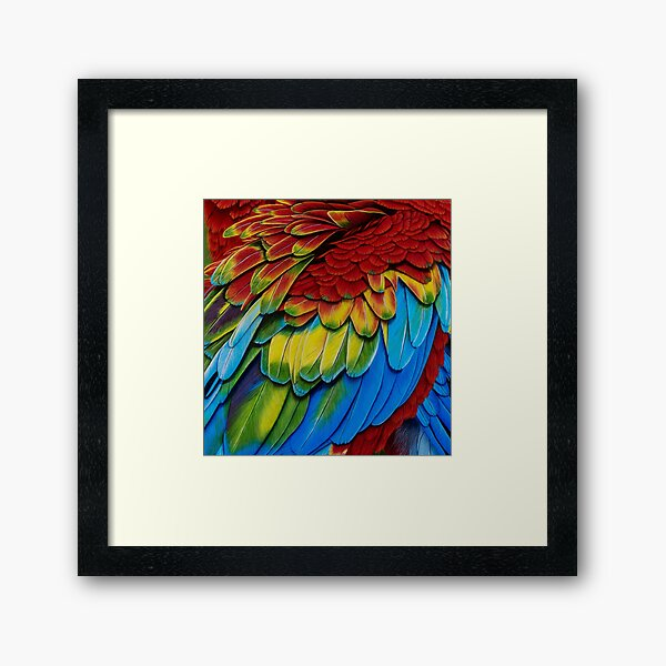 Macaw feathers 1 Framed Art Print