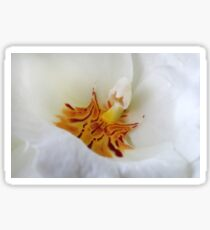 Pansy Orchid Sticker