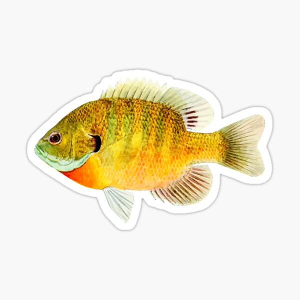 Bluegill (Sunfish) Sticker