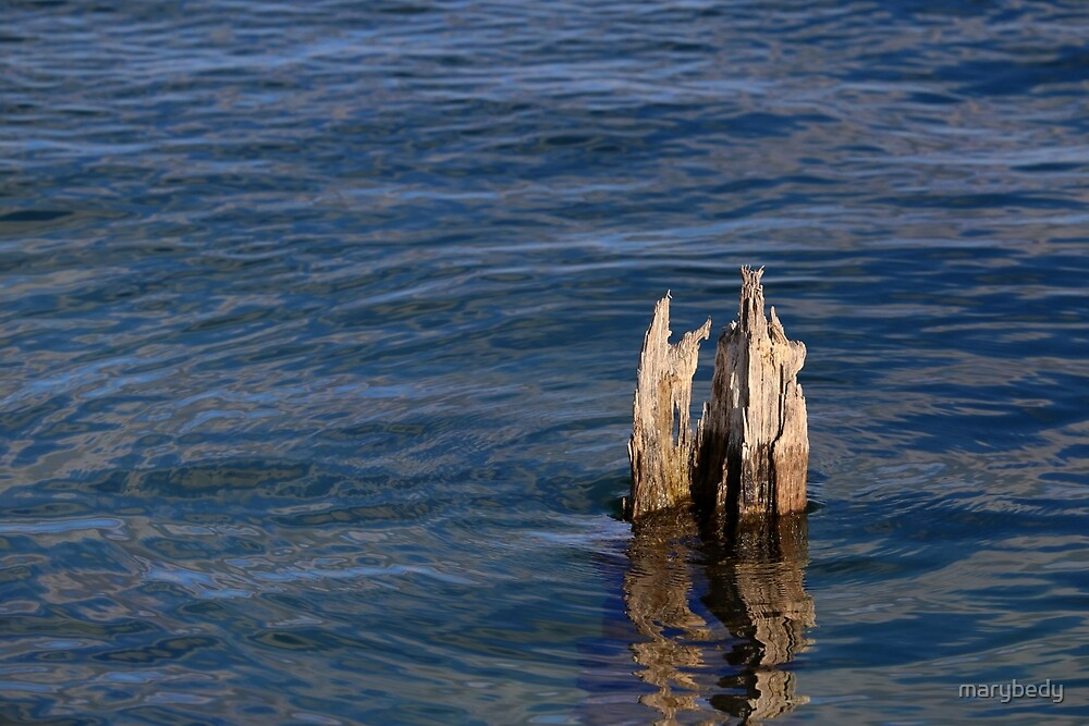 Single Old Piling Horizontal by marybedy