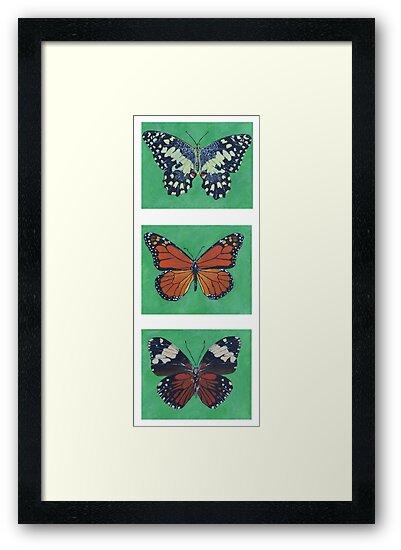 Butterflies by Maya Vavra