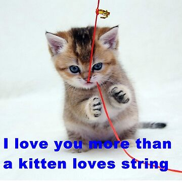 Love you more than kittens love string by rustysloveyou