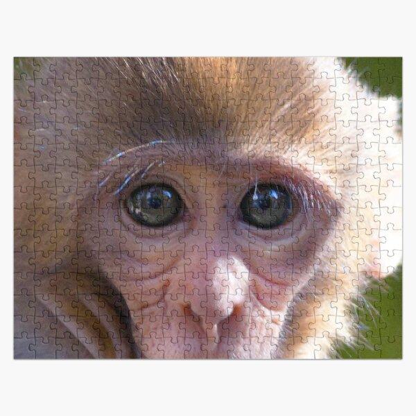 Watercolor Monkey, Rhesus Monkey 03, Silver River, Florida Jigsaw Puzzle
