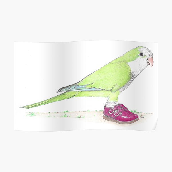Quaker parrot in Mary Janes Poster