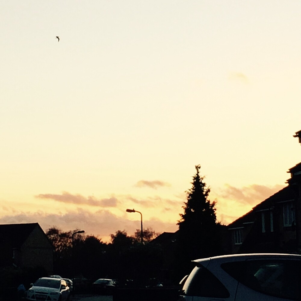 Sunset in the street. by MinkyMoo