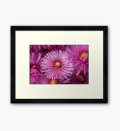 Pink Pigface Flowers Framed Print