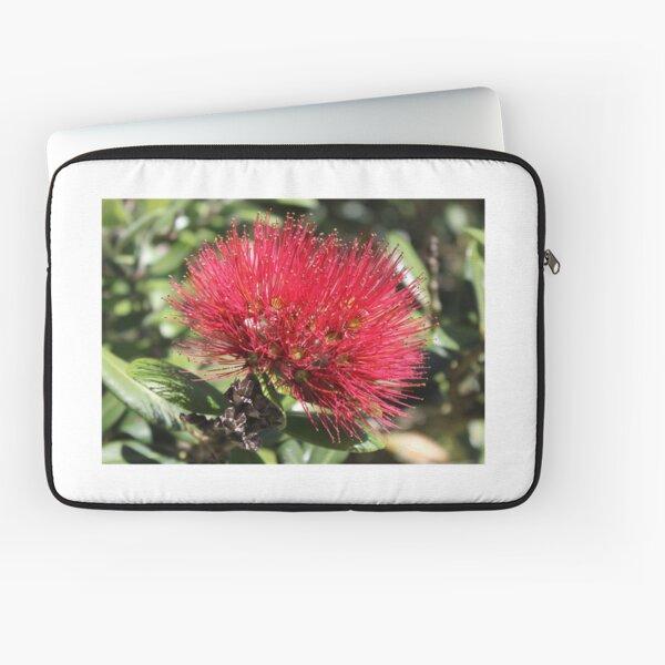 Pohutakawa Flower Laptop Sleeve