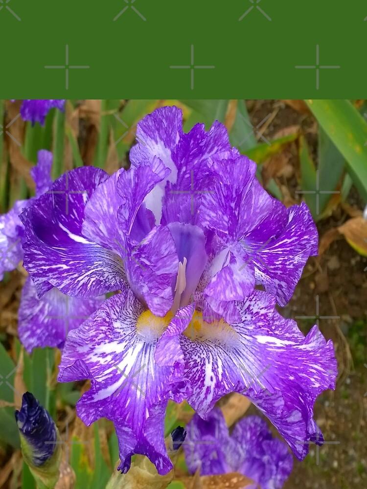 Montclair New Jersey-Presby Iris Gardens by Matlgirl