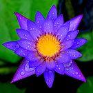 A Blue Star by Brian Bo Mei