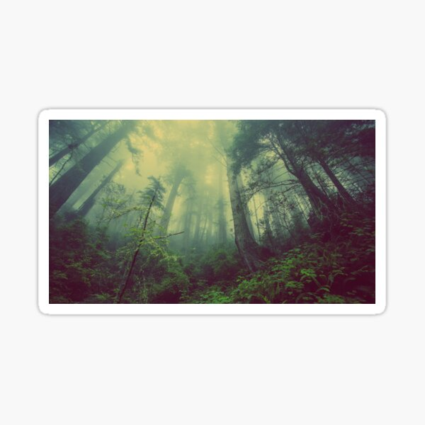 lost in the forest Sticker