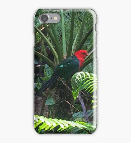Rainforest Parrot iPhone Case/Skin