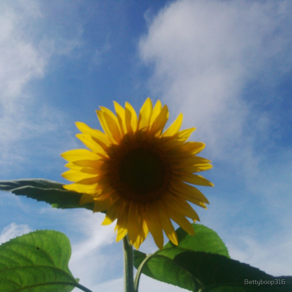 Sunflower on a blue sky day by Bettyboop316