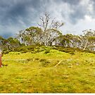 Four Mile Hut, Kosciuszko, New South Wales, Australia by Michael Boniwell