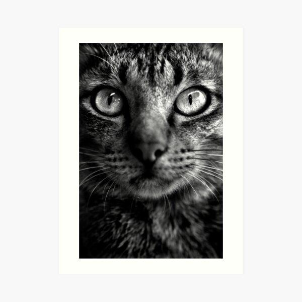 Cat. Art Print