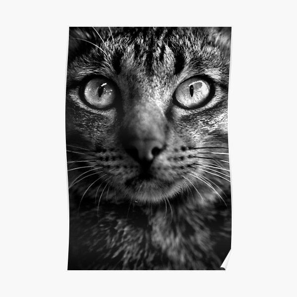 Cat. Poster