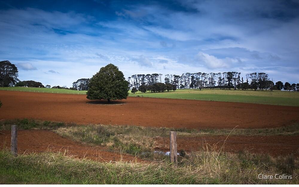 Really Red Soil Dorrigo by Clare Colins
