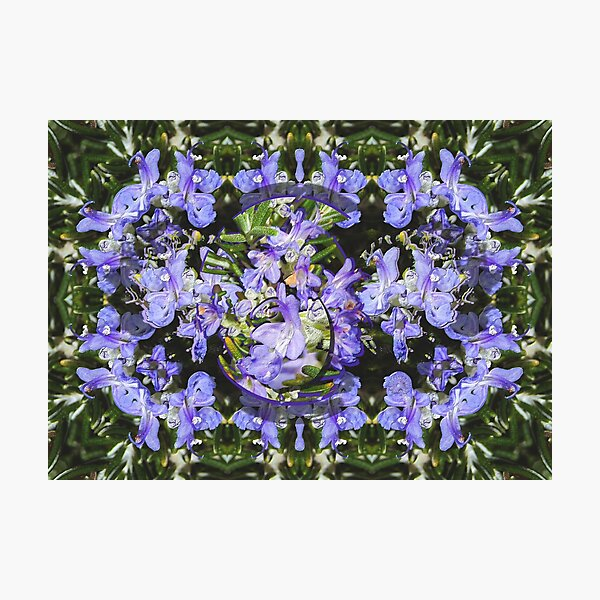FLORAL ~ Rosemary by tasmanianartist 190920 Photographic Print
