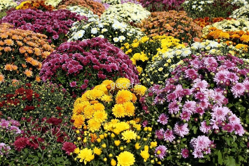 chrysanthemum autumn scene by goceris